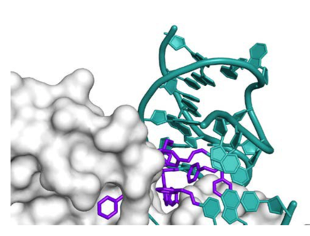 X=ray crystal structure of a SOMAmer reagent bound to PDGF-BB